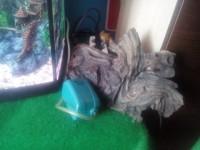 akvarijis